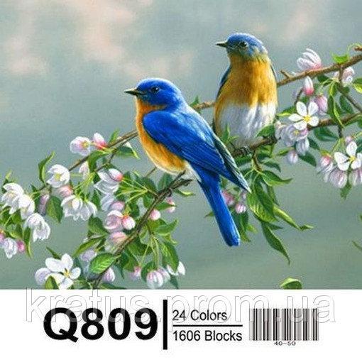 "QS809 ""Птички на яблоне"" Роспись по номерам на холсте 65х50см"