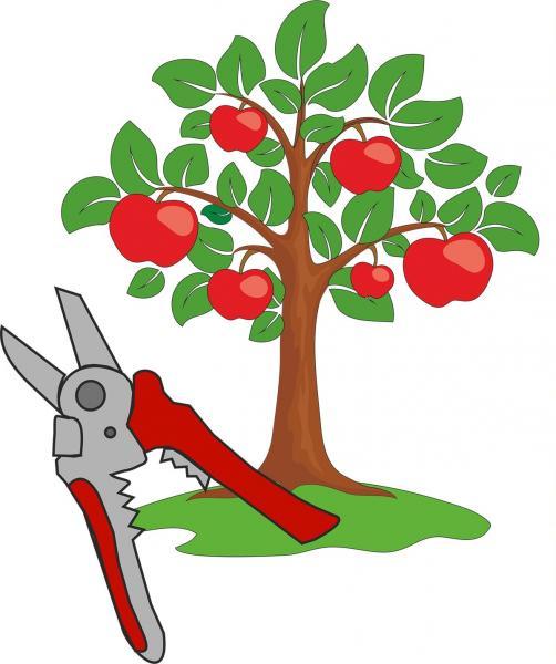 Обрезка деревьев и винограда, хвойных  Донецк