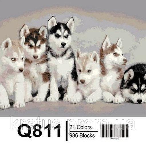 "Q811 ""Маленькие хаски"" Роспись по номерам на холсте 40х50см"