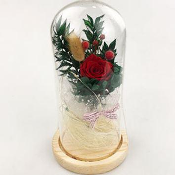Живая роза в стеклянной колбе