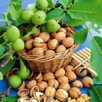 Саженцы привитого грецкого ореха ПЕСЧАНСКИЙ (двухлетний)