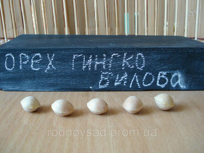 Гинкго билоба семена 10 шт(гинко, гинго, гингко) для выращивания саженцев/насіння гінкго(гінко, гінго, гінгко)
