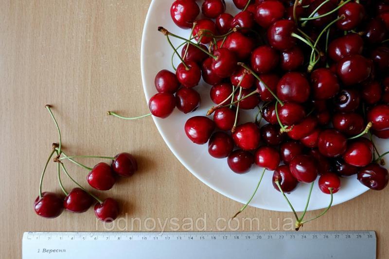 "Черешня красная ""Валерий Чкалов"" семена (10 штук) насіння, косточка, семечка для саженцев + инструкция"