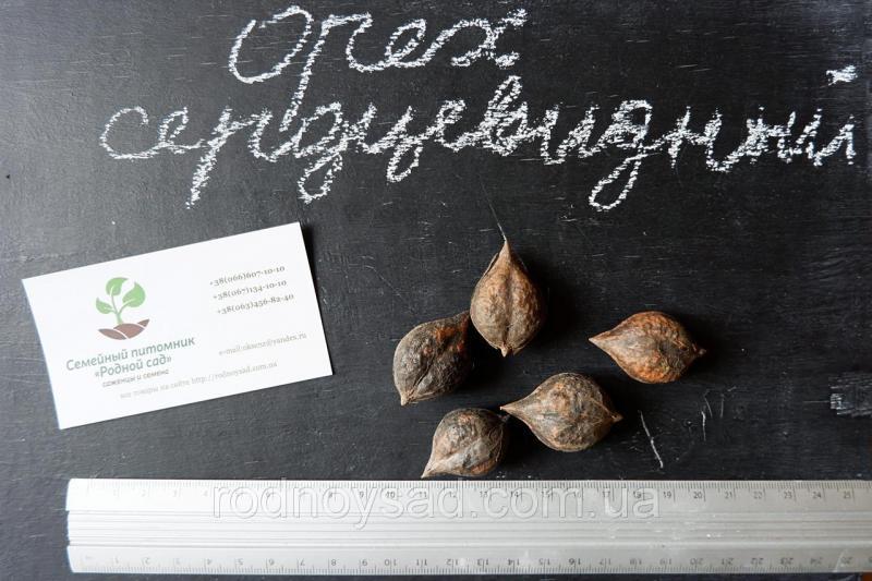 Орех сердцевидный семена (10шт) для выращивания саженцев насіння горіх для саджанців + инструкция