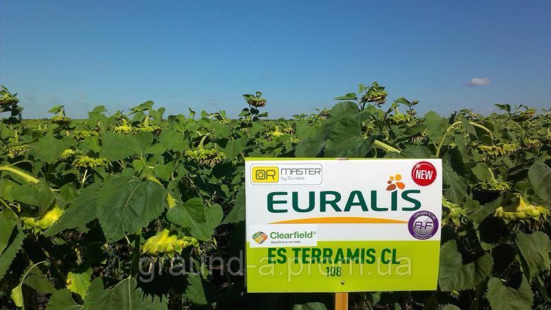 Семена подсолнечника ЕС Террамис СЛ
