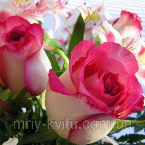 Саженец роз чайно-гибридной Инджой