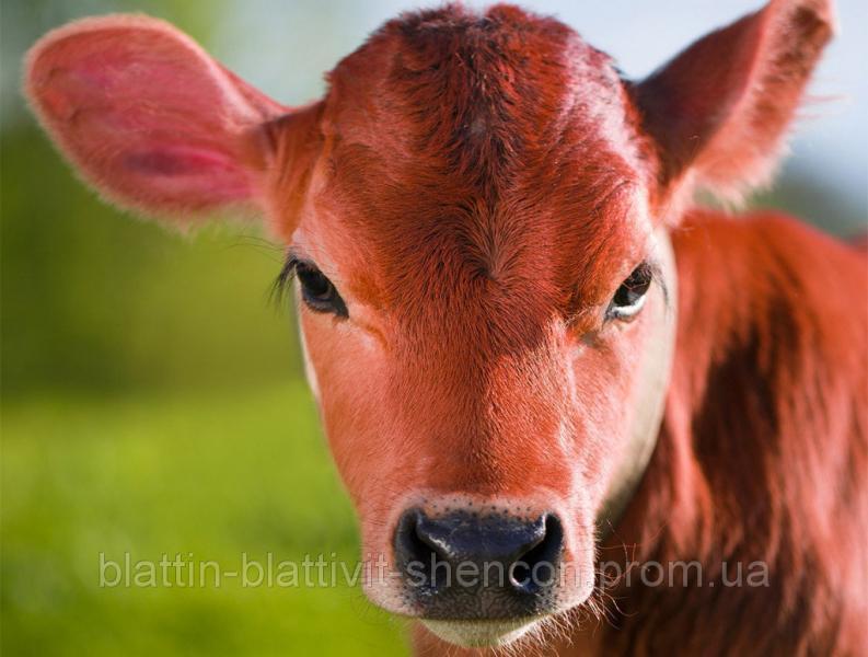Комбикорм стартер для телят 0-6 мес