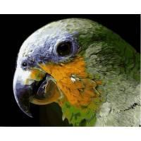 Фото Картины на холсте по номерам, Животные. Птицы. Рыбы... Q2157