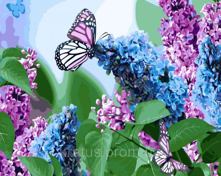 """KGX 4931 """"Бабочки на сирени""""  Роспись по номерам на холсте 40х50см в коробке"""