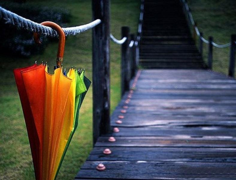 различные типы зонтов фото