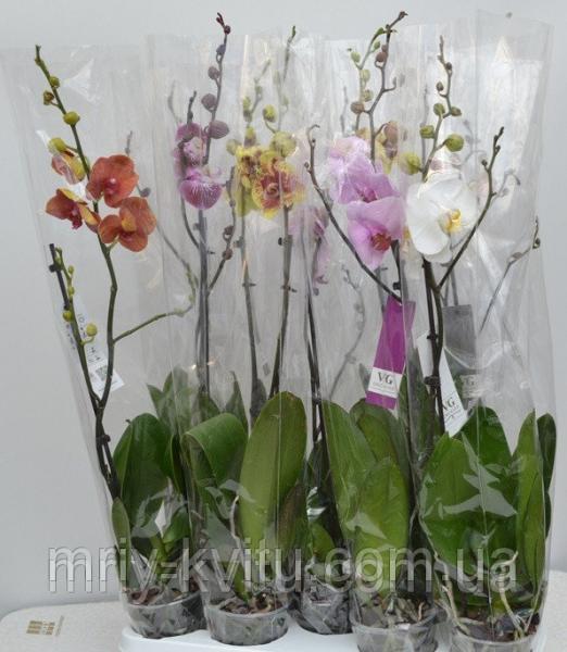 Вазон Орхидея1 12/80
