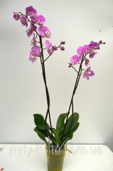 Вазон Орхидея1 12/45