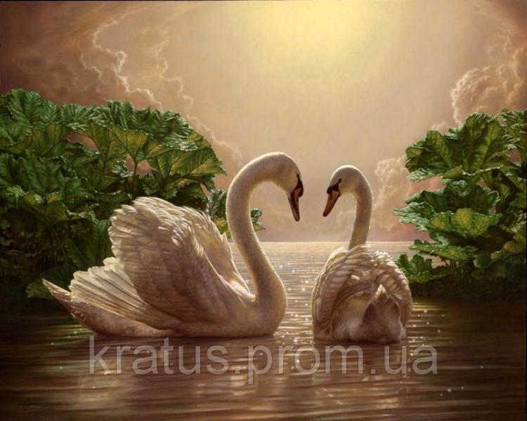 Фото Картины на холсте по номерам, Животные. Птицы. Рыбы... MS 325