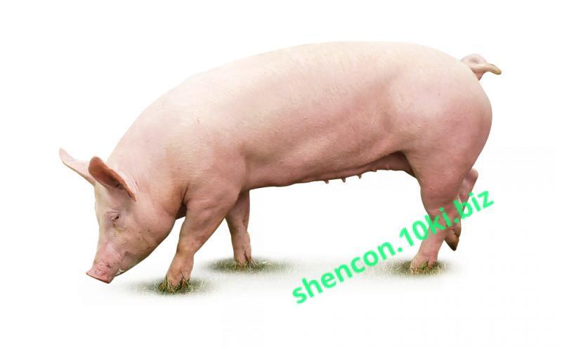 Фото ПРЕМИКС - ШЕНКОН, Премиксы для свиней Премикс
