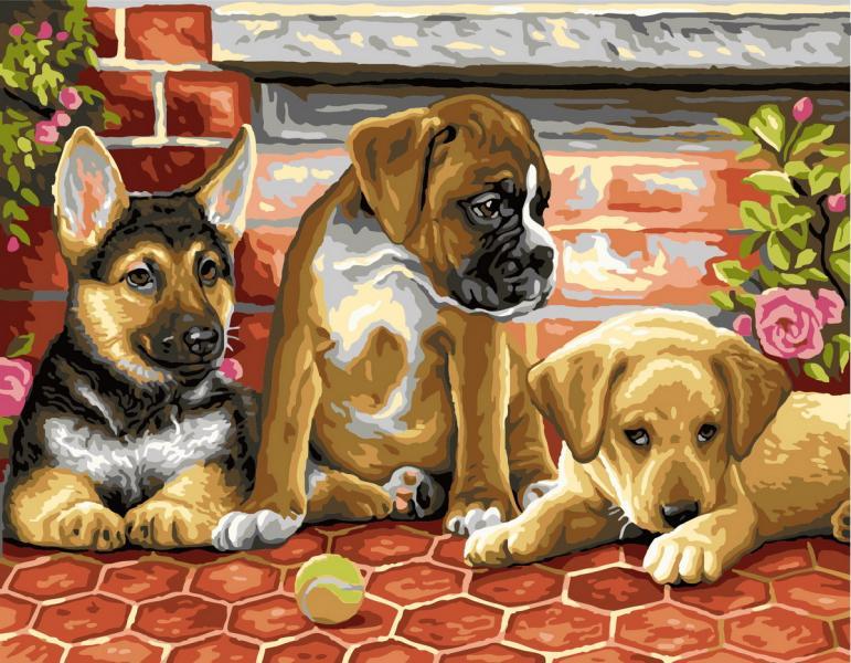 Фото Картины на холсте по номерам, Животные. Птицы. Рыбы... KGX 6714 Три щенка и мячик Картина по номерам  40х50см в коробке