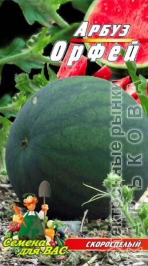 Арбуз Орфей пакет 40 семян - Семена, саженцы и рассада плодово-ягодных культур на рынке Барабашова