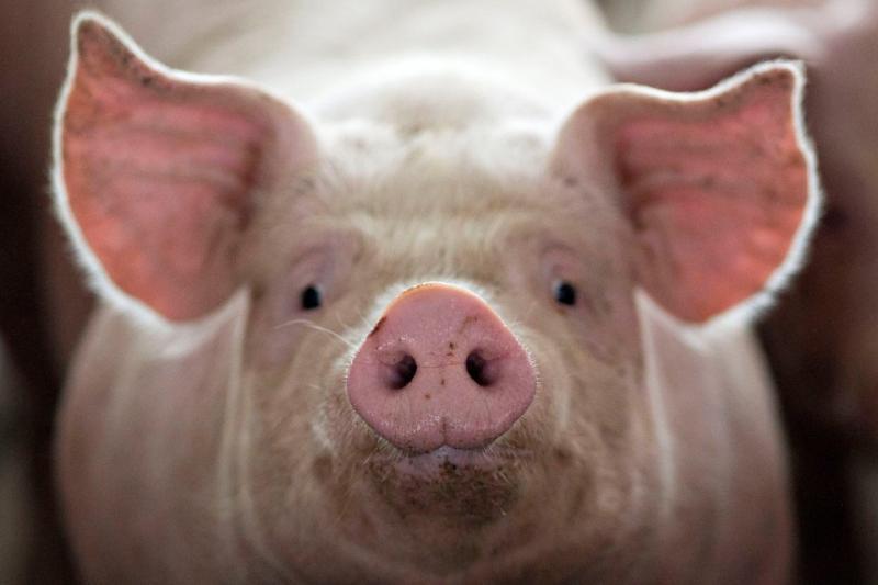 БВМД для свиней финиш универсальный 15-10%