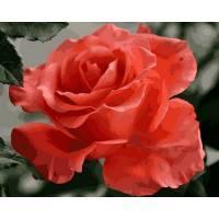 Фото Картины на холсте по номерам, Букеты, Цветы, Натюрморты Q2158