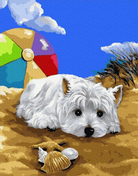 Фото Картины на холсте по номерам, Животные. Птицы. Рыбы... KGX 27765 Болонка на пляже Картина по номерам на холсте 40х50см