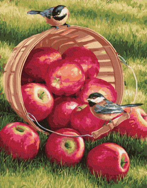 Фото Картины на холсте по номерам, Картины  в пакете (без коробки) 50х40см; 40х40см; 40х30см, Цветы, букеты, натюрморты GX 32292 Яблоки для птичек Картина по номерам на холсте 40х50см (без коробки)