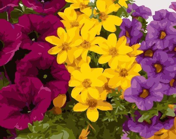 Фото Картины на холсте по номерам, Букеты, Цветы, Натюрморты KGX 24789 Разноцветная клумба Картина по номерам на холсте 40х50см