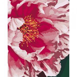 Фото Картины на холсте по номерам, Букеты, Цветы, Натюрморты KH 3039 Пион Роспись по номерам на холсте (в коробке) 40х50см