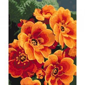 Фото Картины на холсте по номерам, Картины  в пакете (без коробки) 50х40см; 40х40см; 40х30см, Цветы, букеты, натюрморты KHO 3050 Оранжевая примула Роспись по номерам на холсте (без коробки) 40х50см