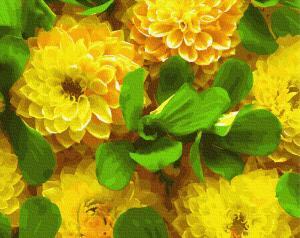 Фото Картины на холсте по номерам, Букеты, Цветы, Натюрморты KGX 27272 Желтые георгины Картина по номерам на холсте 40х50см