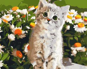 Фото Картины на холсте по номерам, Животные. Птицы. Рыбы... AS 0727 Кот и ромашки Картина по номерам на холсте Art Story 40x50см