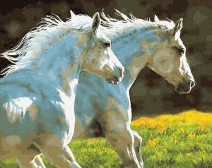 Фото Картины на холсте по номерам, Животные. Птицы. Рыбы... KGX 30151 Пара белых лошадей Картина по номерам на холсте 40х50см