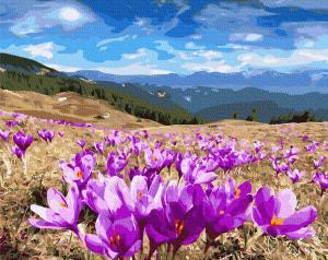 Фото Картины на холсте по номерам, Букеты, Цветы, Натюрморты KGX27318 Долина крокусов по номерам на холсте 40х50см
