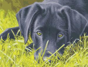 Фото Картины на холсте по номерам, Картины по номерам 50х65см AS 0968 Грустный пёс Картина по номерам на холсте ART STORY 50x65см