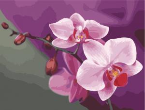 Фото Картины на холсте по номерам, Картины  в пакете (без коробки) 50х40см; 40х40см; 40х30см, Цветы, букеты, натюрморты Картина по номерам без коробки Идейка Розовые орхидеи 40х50см (KHO 1081)