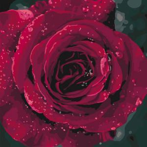 Фото Картины на холсте по номерам, Картины  в пакете (без коробки) 50х40см; 40х40см; 40х30см, Цветы, букеты, натюрморты Картина по номерам без коробки Идейка Роза 40х40см (KHO 3038)