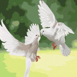 Фото Картины на холсте по номерам, Животные. Птицы. Рыбы... Картина по номерам в коробке Идейка Белоснежные голуби 40х40см (KH 4149)