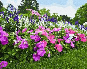 Фото Картины на холсте по номерам, Букеты, Цветы, Натюрморты Картина по номерам в коробке Paintboy Цветущая петуния 40х50см (KGX 29101)