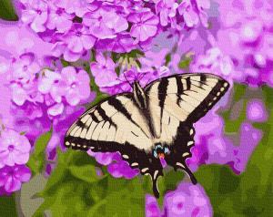 Фото Картины на холсте по номерам, Букеты, Цветы, Натюрморты Картина по номерам в коробке Paintboy Бабочка в цветах 40х50см (KGX 27423)