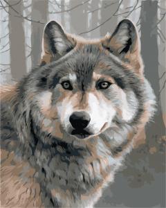 Фото Картины на холсте по номерам, Животные. Птицы. Рыбы... Картина по номерам в коробке ArtStory Одинокий волк 40x50см (AS 0879)