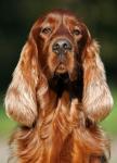 логотип Вет-Вектор    +380(48)  700-03-74             Ветеринарные препараты оптом