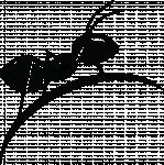 логотип Муравьи и муравьиные фермы (Формикарии). Интернет магазин - Ant Shop